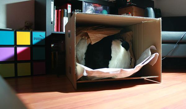 geöffnetes Paket..