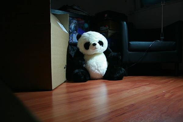 panda in the box