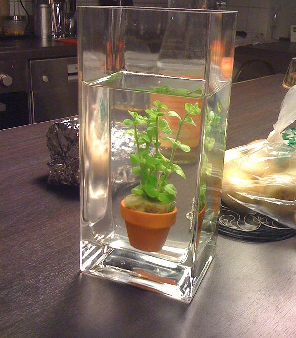 pflanze in Wasser