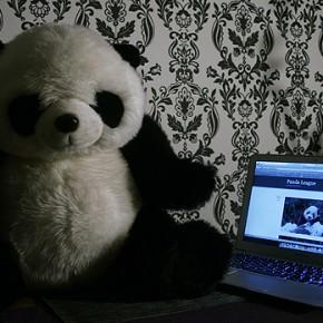 panda internet