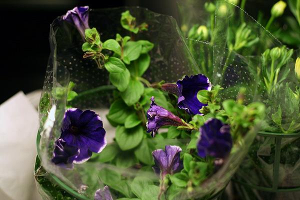 online pflanzen