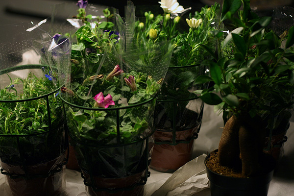 pflanzen online bestellen