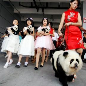 Ich weiß wie ich an meinen Panda komme... ich hol mir einen Panda Dog