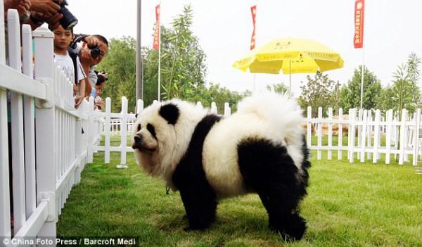 dog panda